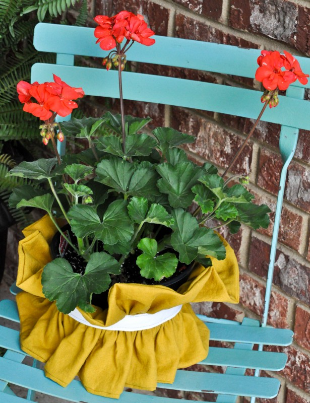 ruffle plant cover-2